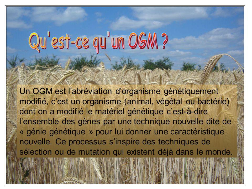 Un OGM est labréviation dorganisme génétiquement modifié, cest un organisme (animal, végétal ou bactérie) dont on a modifié le matériel génétique cest