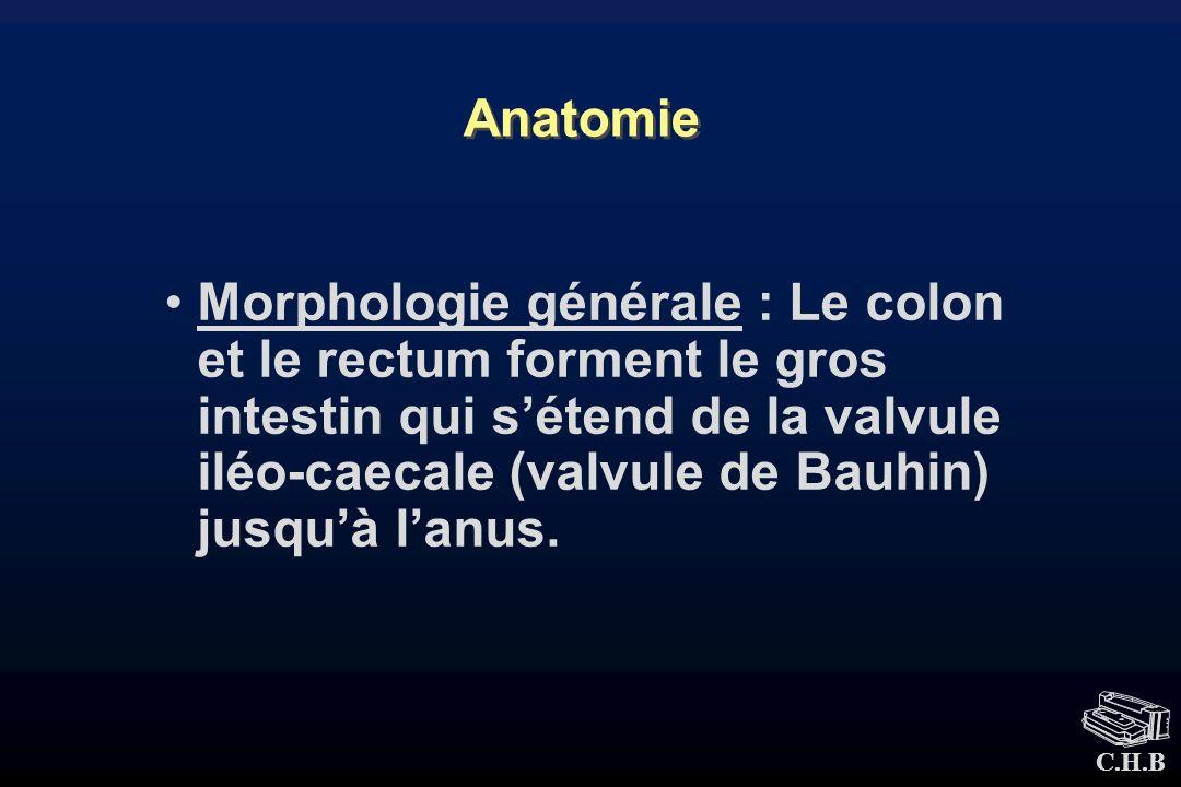 C.H.B Anatomie Morphologie générale : Le colon et le rectum forment le gros intestin qui sétend de la valvule iléo-caecale (valvule de Bauhin) jusquà