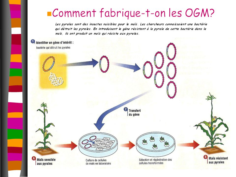 Dans quel but les OGM ont-ils été créés .