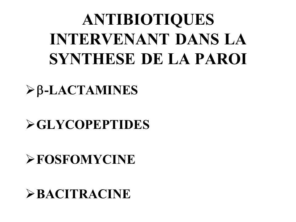 ANTIBIOTIQUES INTERVENANT DANS LA SYNTHESE DE LA PAROI -LACTAMINES GLYCOPEPTIDES FOSFOMYCINE BACITRACINE