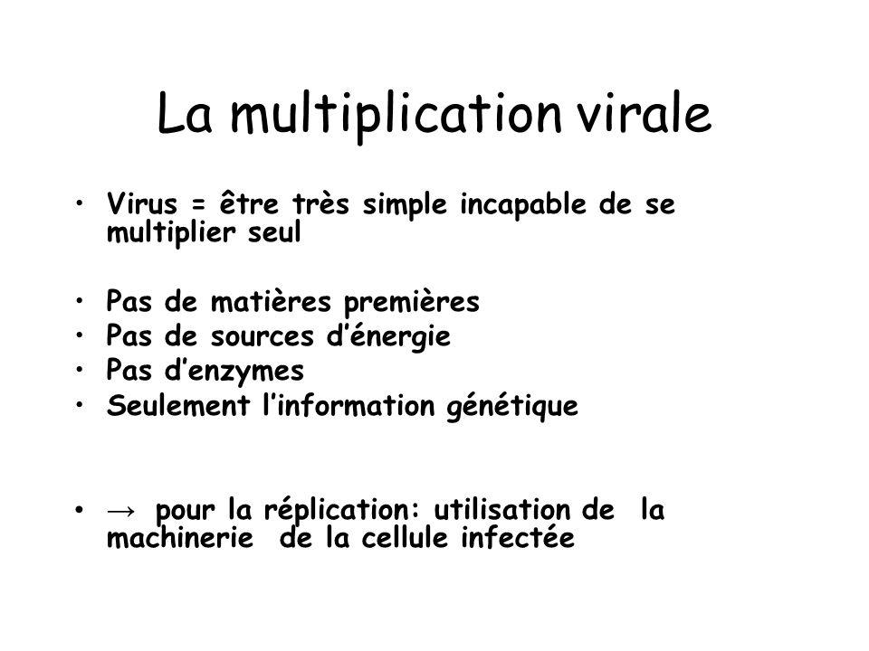 La multiplication virale Virus = être très simple incapable de se multiplier seul Pas de matières premières Pas de sources dénergie Pas denzymes Seule
