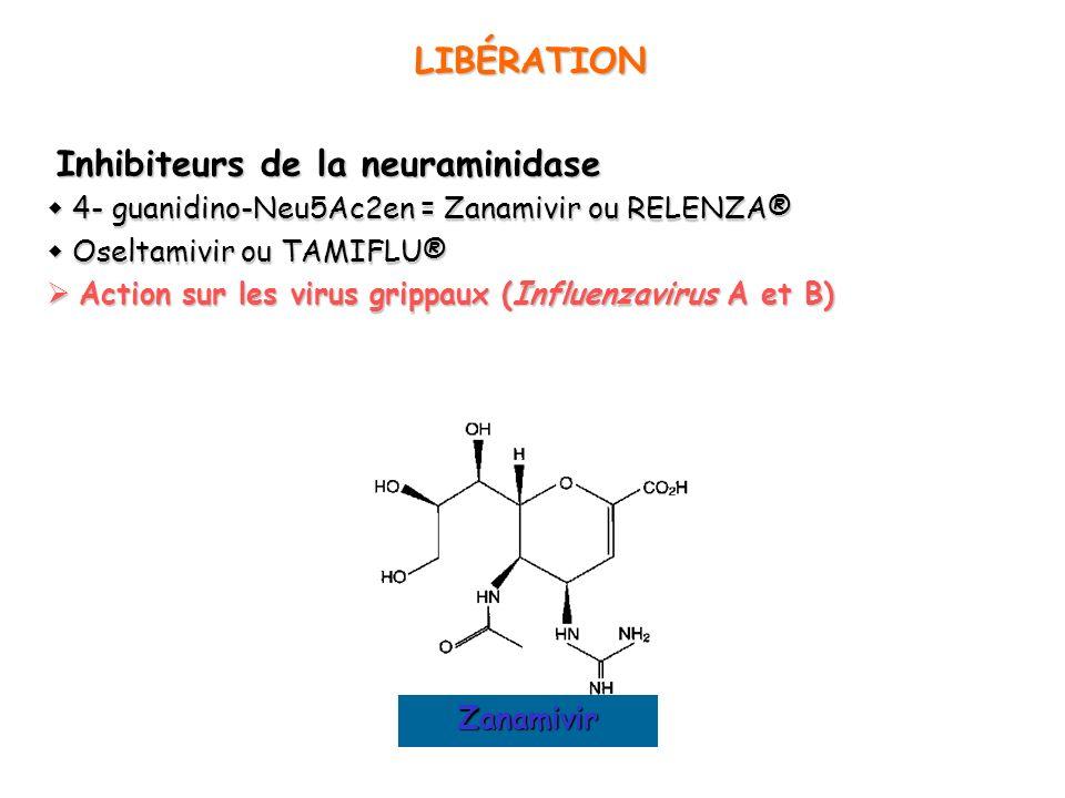 LIBÉRATION Inhibiteurs de la neuraminidase Inhibiteurs de la neuraminidase 4- guanidino-Neu5Ac2en = Zanamivir ou RELENZA® 4- guanidino-Neu5Ac2en = Zan