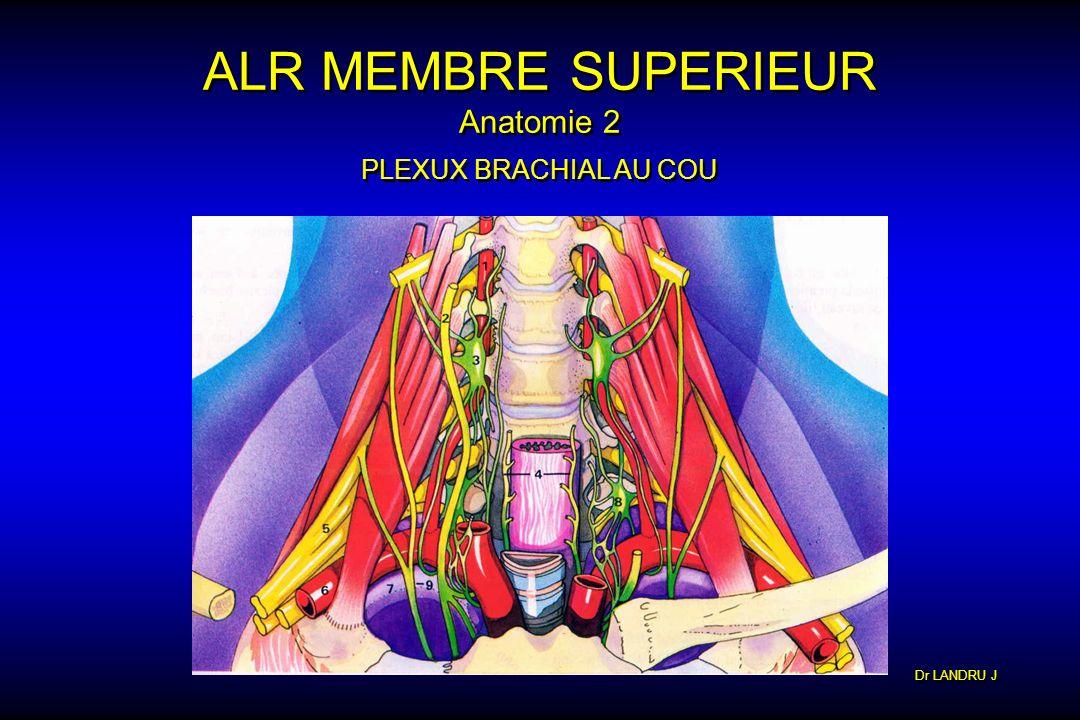 Dr LANDRU J ALR MEMBRE SUPERIEUR Anatomie 2 PLEXUX BRACHIAL AU COU