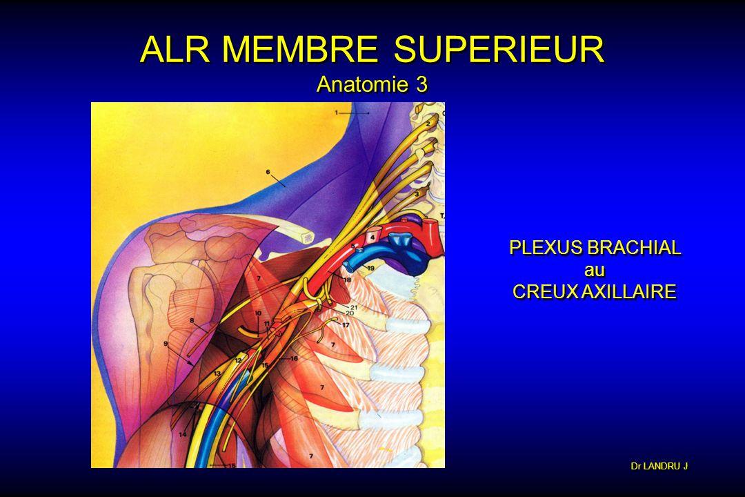 Dr LANDRU J ALR MEMBRE SUPERIEUR Anatomie 3 PLEXUS BRACHIAL au CREUX AXILLAIRE PLEXUS BRACHIAL au CREUX AXILLAIRE