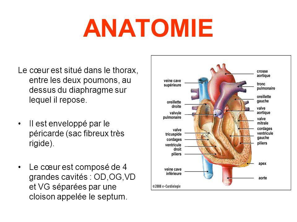 ANATOMIE Le cœur est situé dans le thorax, entre les deux poumons, au dessus du diaphragme sur lequel il repose. Il est enveloppé par le péricarde (sa