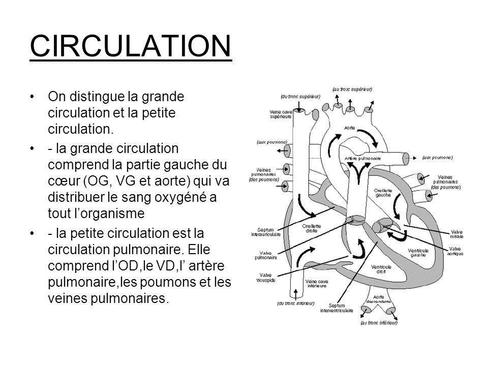 CIRCULATION On distingue la grande circulation et la petite circulation. - la grande circulation comprend la partie gauche du cœur (OG, VG et aorte) q