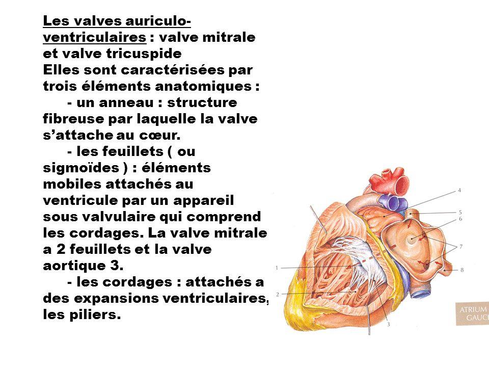 Les valves auriculo- ventriculaires : valve mitrale et valve tricuspide Elles sont caractérisées par trois éléments anatomiques : - un anneau : struct