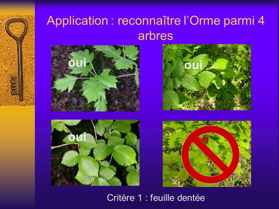 Application : reconnaître lOrme parmi 4 arbres Critère 1 : feuille dentée oui non