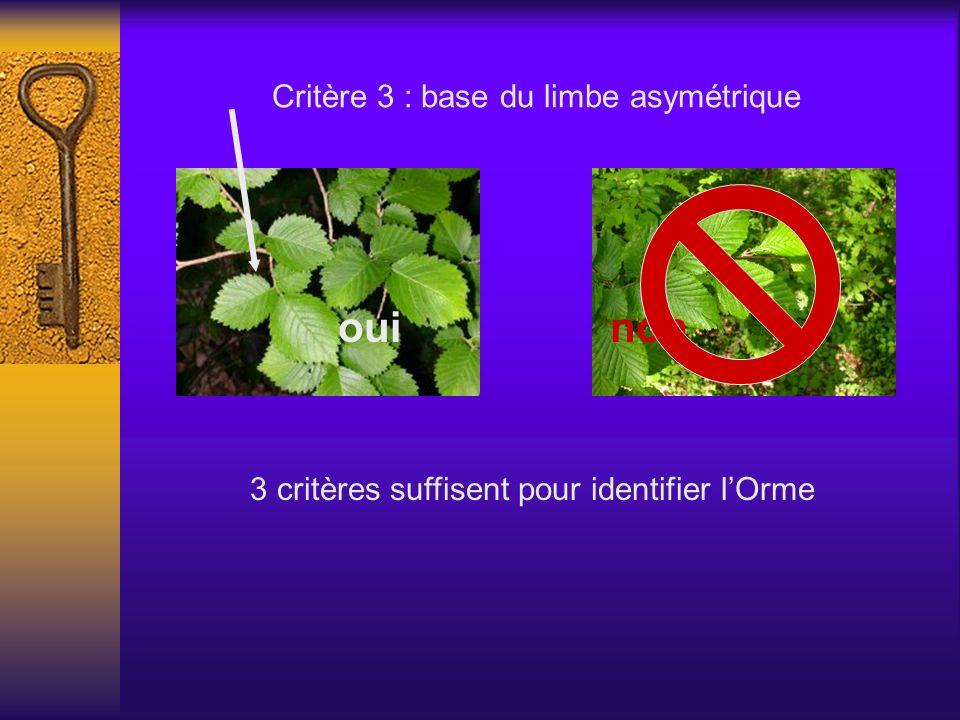 Critère 3 : base du limbe asymétrique ouinon 3 critères suffisent pour identifier lOrme