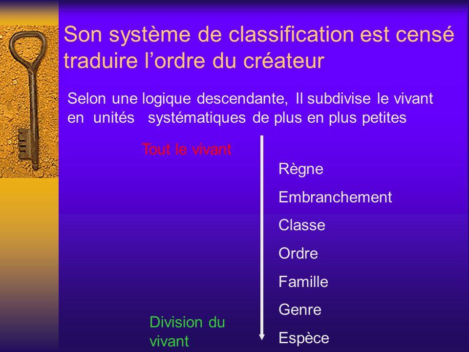 Son système de classification est censé traduire lordre du créateur Règne Embranchement Classe Ordre Famille Genre Espèce Selon une logique descendant