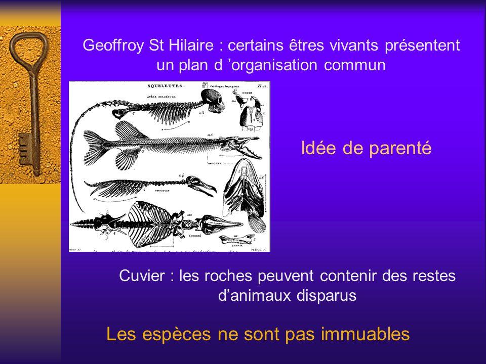Geoffroy St Hilaire : certains êtres vivants présentent un plan d organisation commun Idée de parenté Cuvier : les roches peuvent contenir des restes