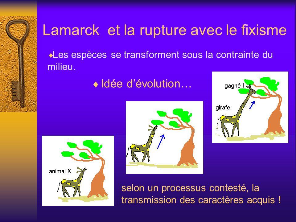 Lamarck et la rupture avec le fixisme Les espèces se transforment sous la contrainte du milieu. selon un processus contesté, la transmission des carac