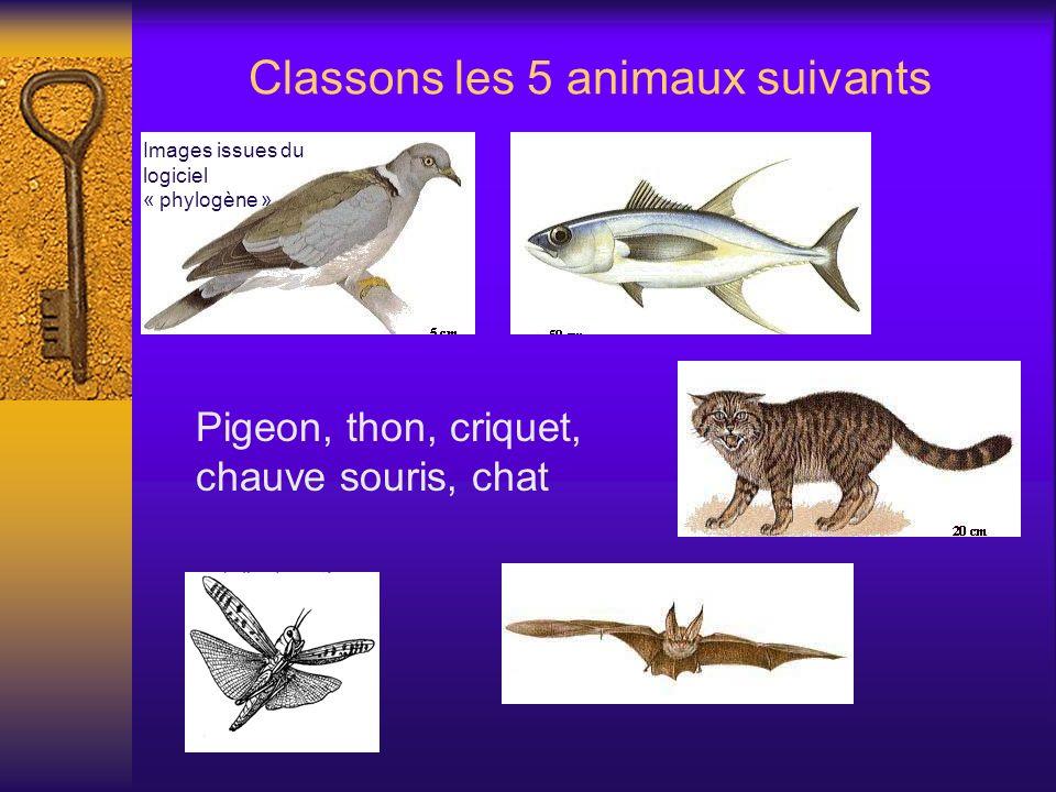 Classons les 5 animaux suivants Pigeon, thon, criquet, chauve souris, chat Images issues du logiciel « phylogène »