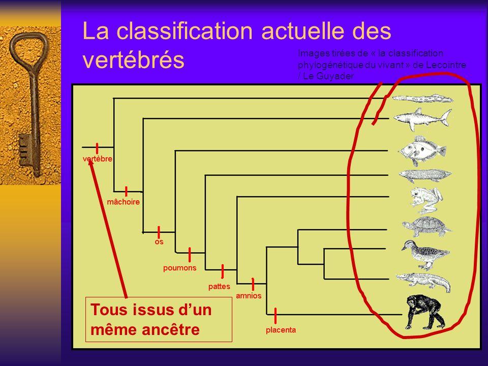 La classification actuelle des vertébrés Tous issus dun même ancêtre Images tirées de « la classification phylogénétique du vivant » de Lecointre / Le