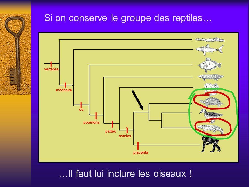 Si on conserve le groupe des reptiles…. Si on conserve le groupe des reptiles… …Il faut lui inclure les oiseaux !