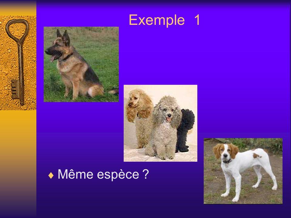 Exemple 1 Même espèce ?