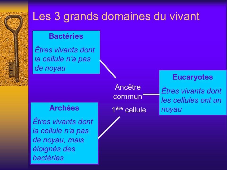 Les 3 grands domaines du vivant Bactéries Êtres vivants dont la cellule na pas de noyau Archées Êtres vivants dont la cellule na pas de noyau, mais él