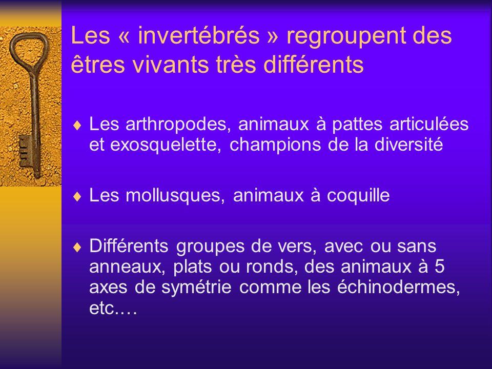 Les « invertébrés » regroupent des êtres vivants très différents Les arthropodes, animaux à pattes articulées et exosquelette, champions de la diversi