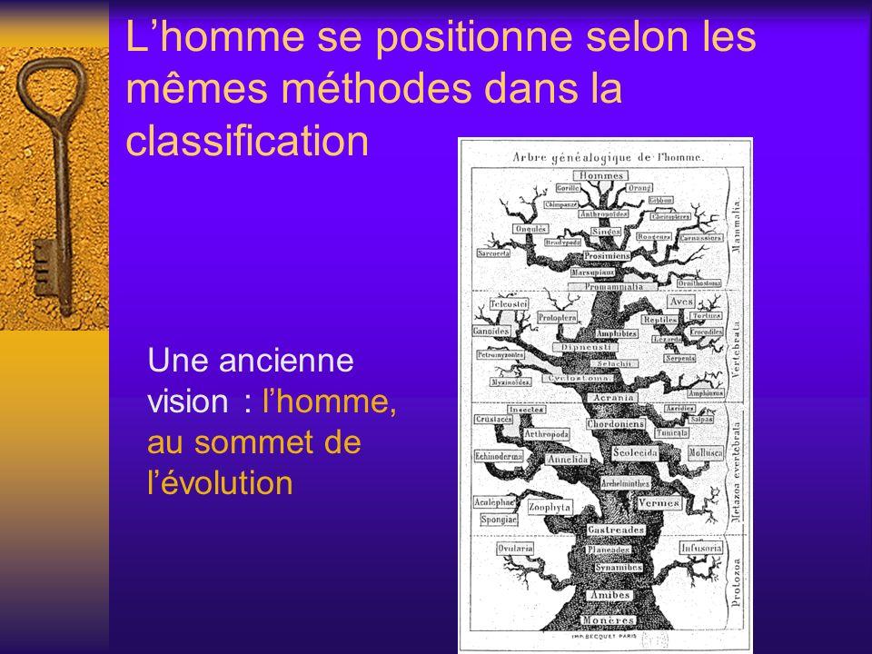 Lhomme se positionne selon les mêmes méthodes dans la classification Une ancienne vision : lhomme, au sommet de lévolution