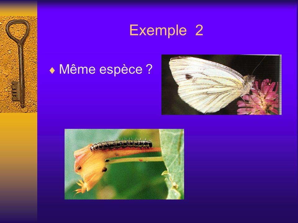 Exemple 2 Même espèce ?