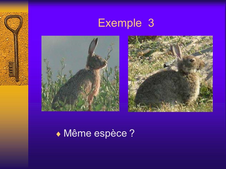 Exemple 3 Même espèce ?