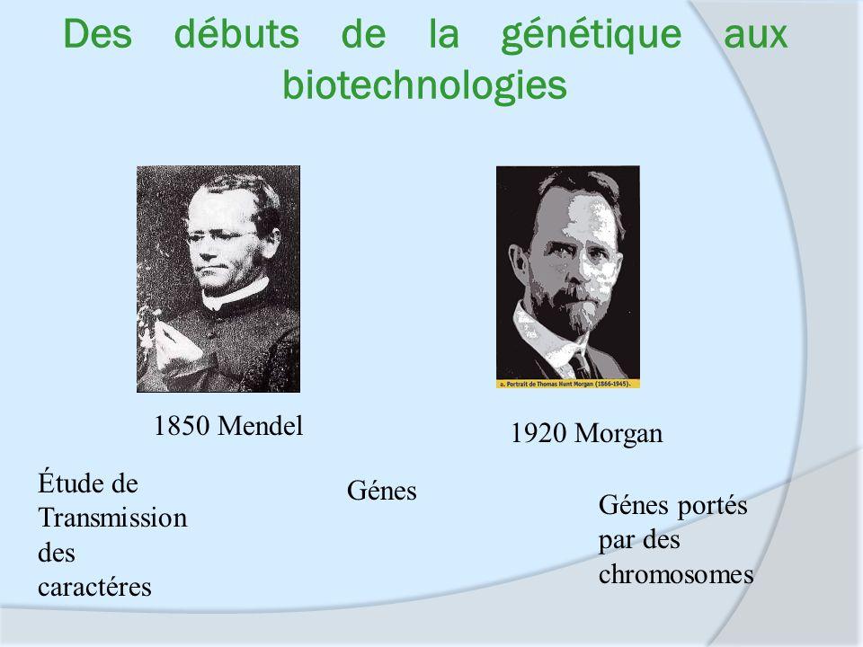 Des débuts de la génétique aux biotechnologies Étude de Transmission des caractéres Génes Génes portés par des chromosomes 1850 Mendel 1920 Morgan