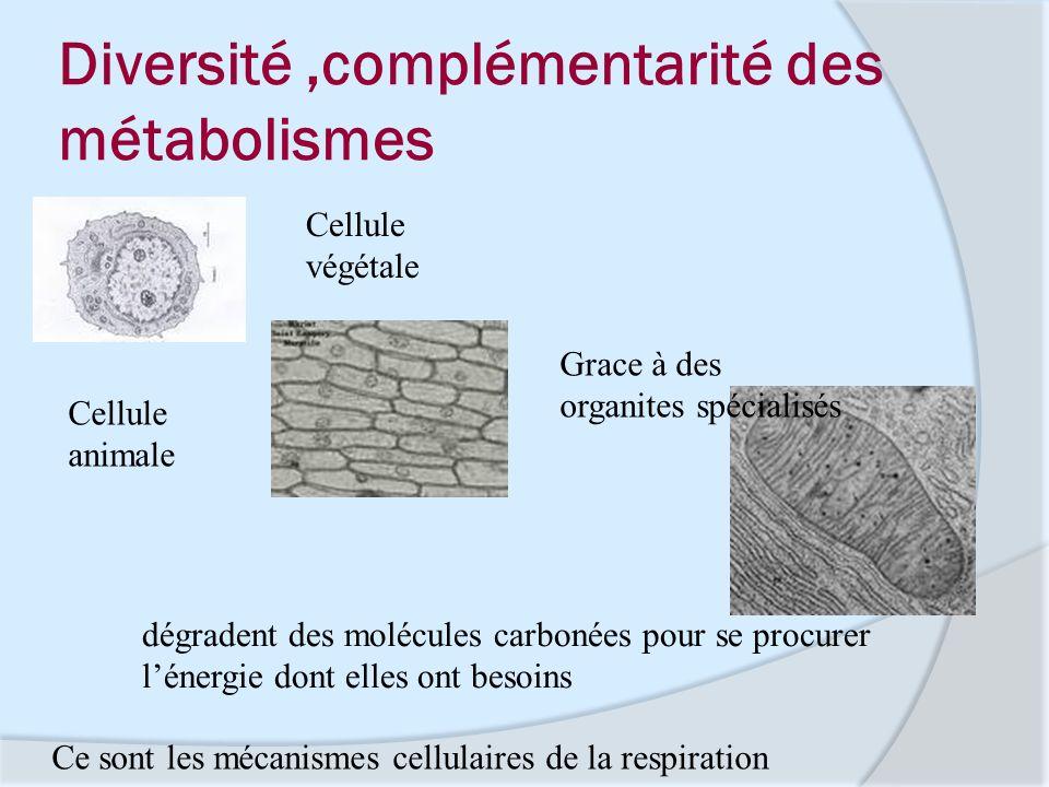 Diversité,complémentarité des métabolismes Grace à des organites spécialisés dégradent des molécules carbonées pour se procurer lénergie dont elles on