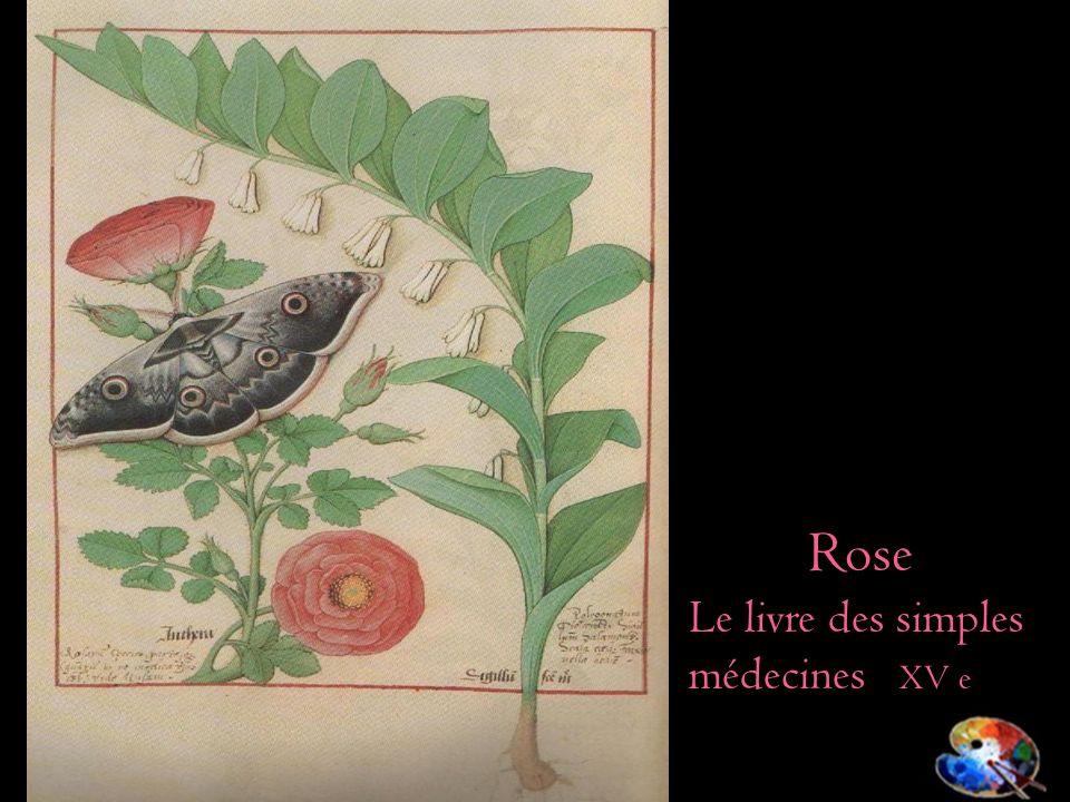 Rose Le livre des simples médecines XV e