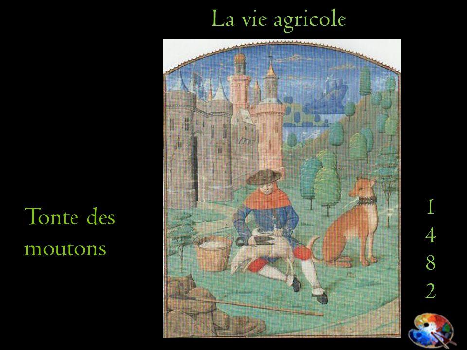 14821482 La vie agricole Tonte des moutons