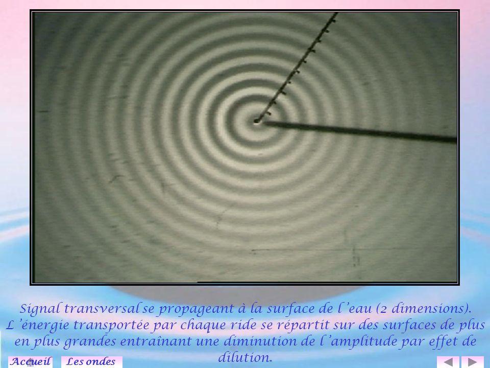 Deux ondes se propageant en sens inverse l une de l autre interfèrent et se croisent sans s affecter.
