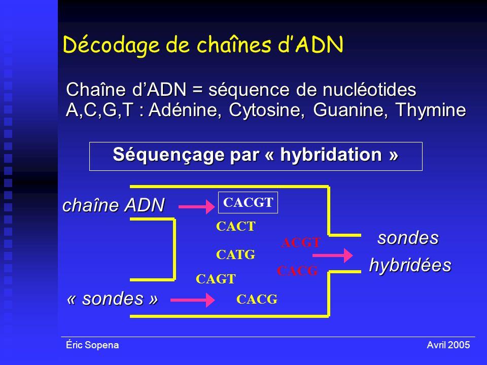 Éric SopenaAvril 2005 Décodage de chaînes dADN chaîne ADN Chaîne dADN = séquence de nucléotides A,C,G,T : Adénine, Cytosine, Guanine, Thymine Séquença