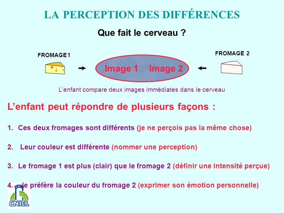 LA PERCEPTION DES DIFFÉRENCES FROMAGE 1 FROMAGE 2 Image 1Image 2 Lenfant peut répondre de plusieurs façons : 1.Ces deux fromages sont différents (je n