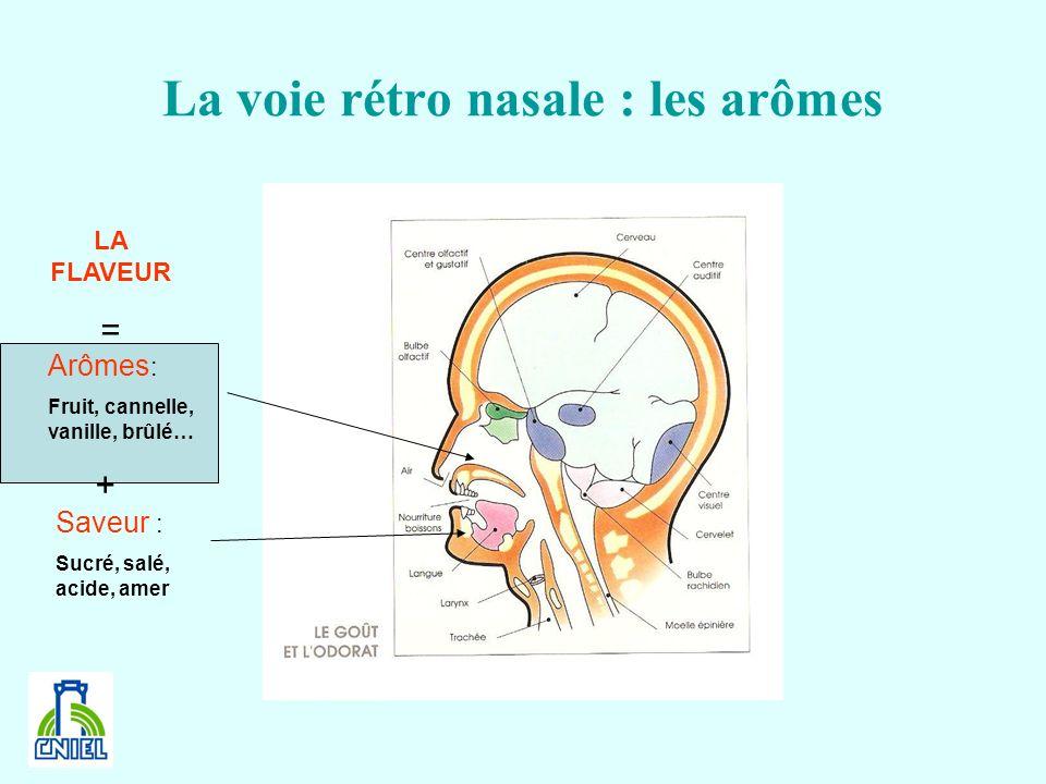 La voie rétro nasale : les arômes Saveur : Sucré, salé, acide, amer Arômes : Fruit, cannelle, vanille, brûlé… + LA FLAVEUR =