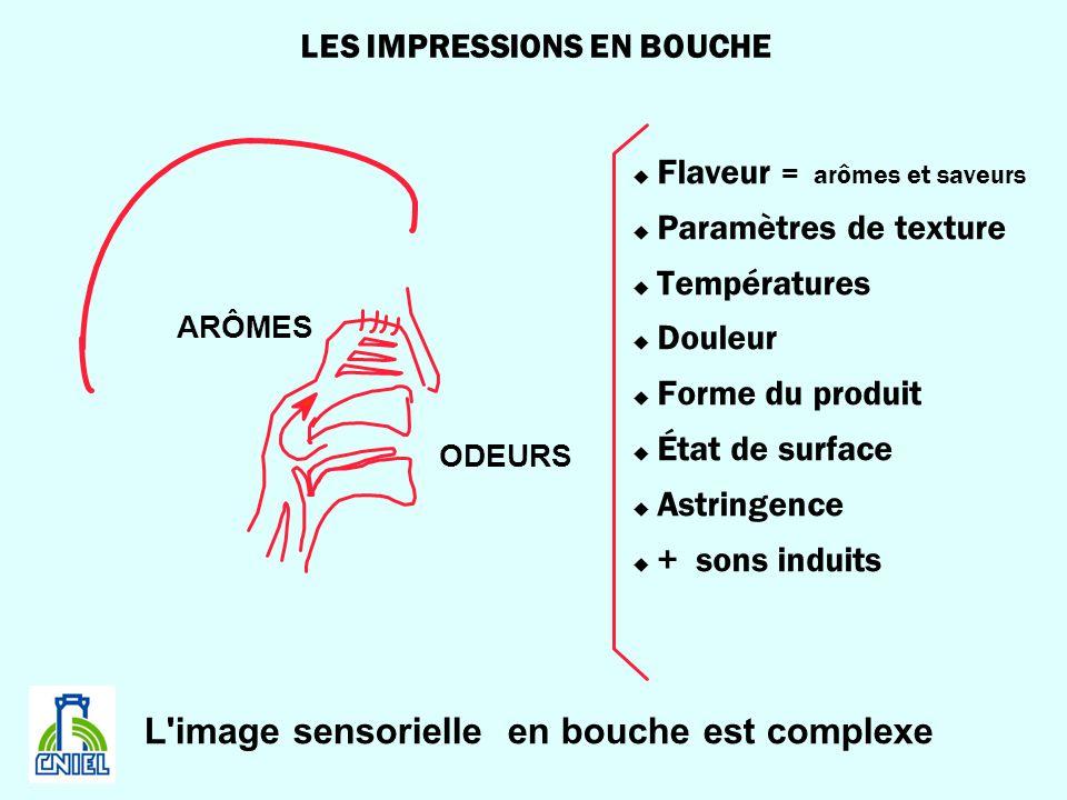 LES IMPRESSIONS EN BOUCHE u Flaveur = arômes et saveurs u Paramètres de texture u Températures u Douleur u Forme du produit u État de surface u Astrin