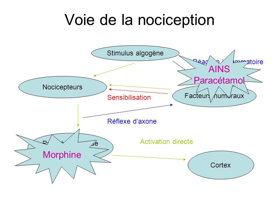 Voie de la nociception Stimulus algogène Nocicepteurs Facteurs humoraux Première synapse corne dorsale Cortex Réaction inflammatoire Réflexe daxone Ac