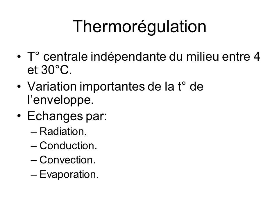 Thermorégulation T° centrale indépendante du milieu entre 4 et 30°C. Variation importantes de la t° de lenveloppe. Echanges par: –Radiation. –Conducti