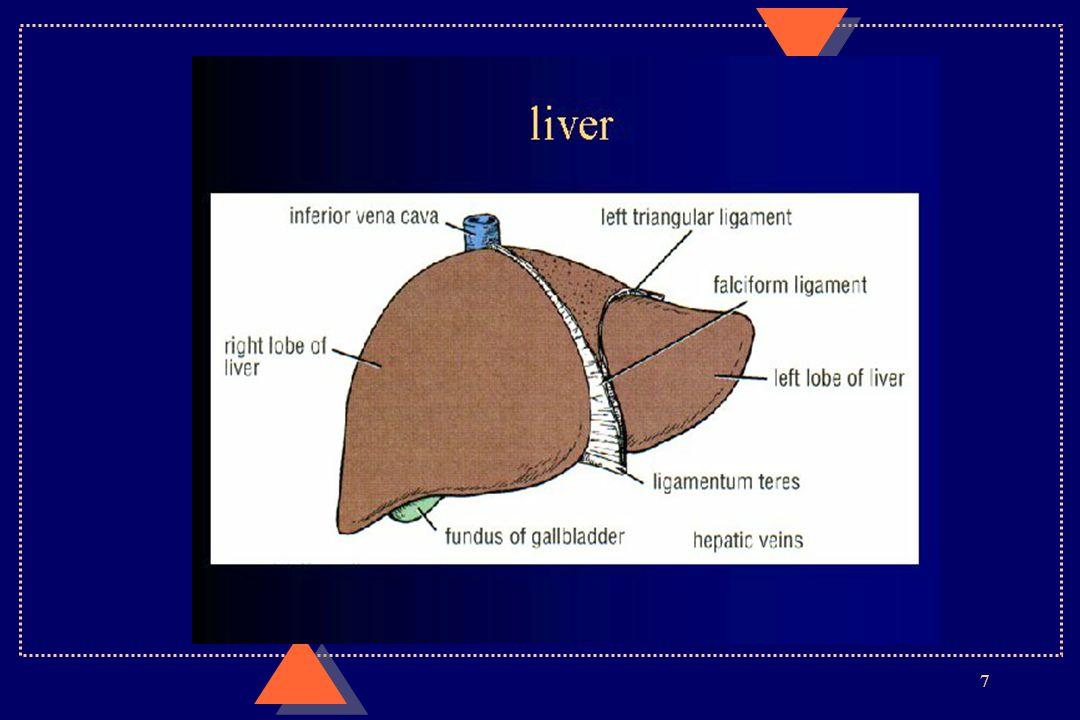 8 AnatomieAnatomie