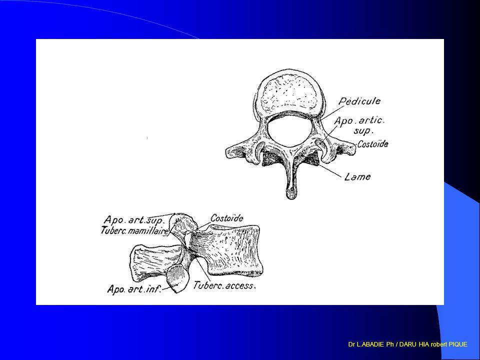 Rappels anatomiques ë Rachis âCervical 4 7 vertèbres cervicales, 4 zone charnière entre le thorax et le crâne.