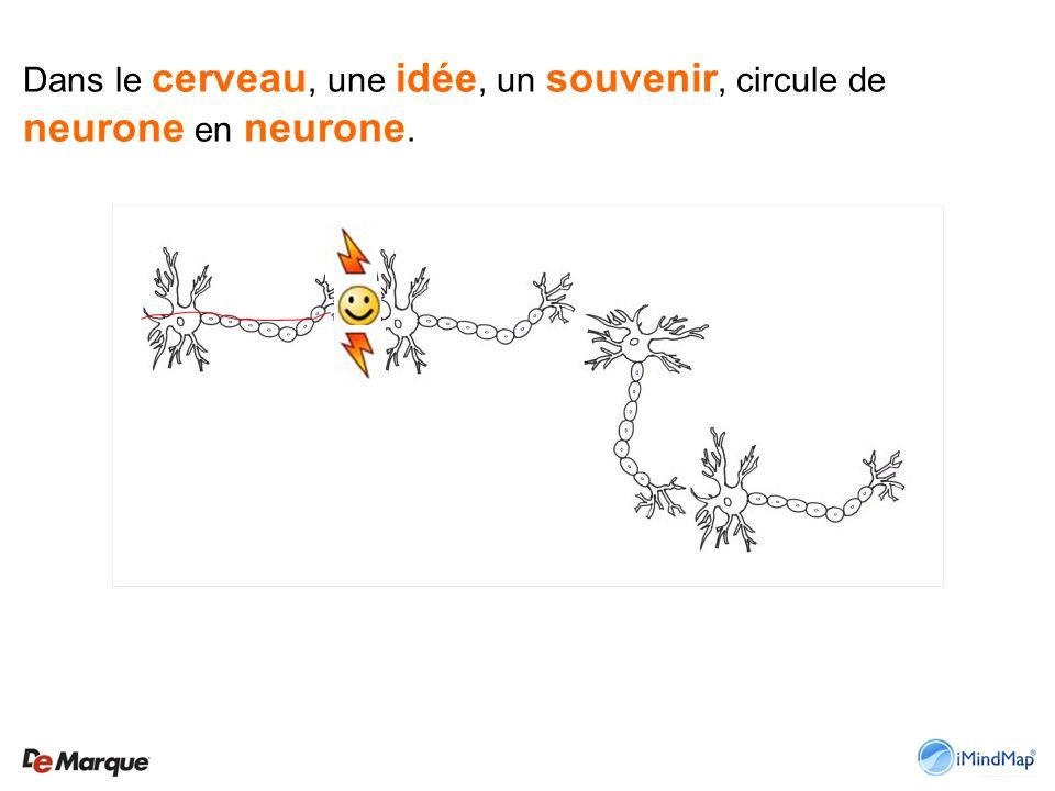 Dans le cerveau, une idée, un souvenir, circule de neurone en neurone.