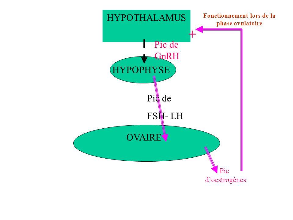 HYPOTHALAMUS HYPOPHYSE OVAIRE Fonctionnement lors de la phase ovulatoire Pic doestrogènes Pic de GnRH Pic de FSH- LH +