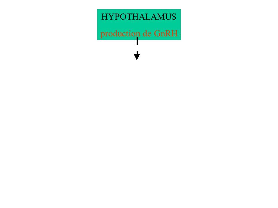 HYPOTHALAMUS production de GnRH HYPOPHYSE FSH LH OVAIRE Oestrogènes Progestérone Développement utérin - - HYPOPHYSE OVAIRE Fonctionnement lors de la phase ovulatoire Pic doestrogènes Pic de GnRH Pic de FSH- LH Ovulation + Rétrocontrôle POSITIF Fonctionnement lors des phases folliculaire et lutéinique Rétrocontrôle négatif