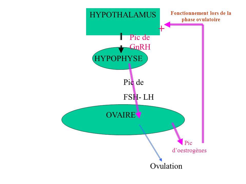 HYPOTHALAMUS HYPOPHYSE OVAIRE Fonctionnement lors de la phase ovulatoire Pic doestrogènes Pic de GnRH Pic de FSH- LH + Ovulation