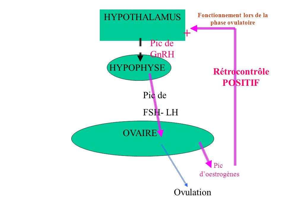 HYPOTHALAMUS HYPOPHYSE OVAIRE Fonctionnement lors de la phase ovulatoire Pic doestrogènes Pic de GnRH Pic de FSH- LH Ovulation + Rétrocontrôle POSITIF