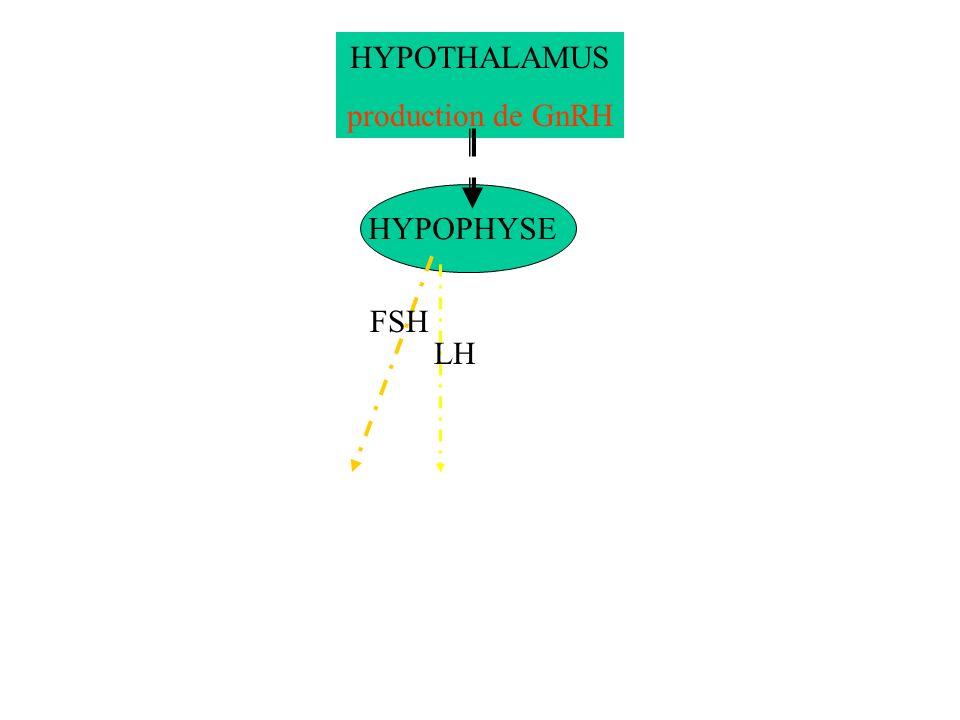 HYPOTHALAMUS production de GnRH HYPOPHYSE FSH LH