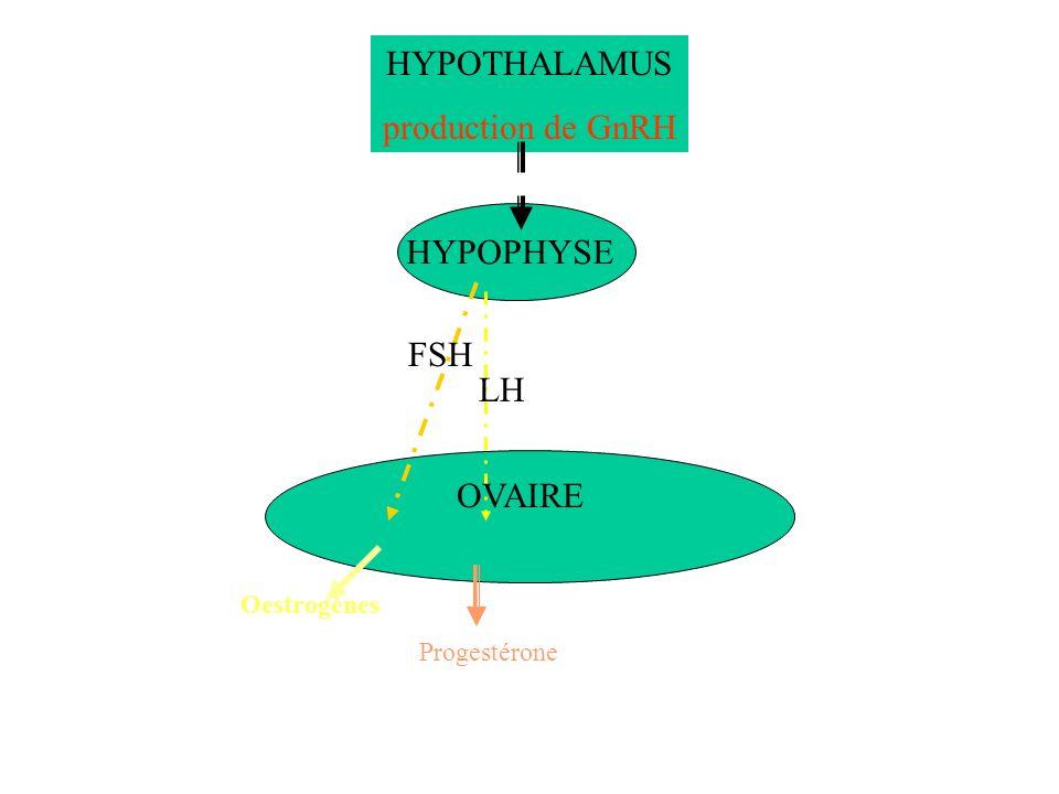 HYPOTHALAMUS production de GnRH HYPOPHYSE FSH LH OVAIRE Oestrogènes Progestérone