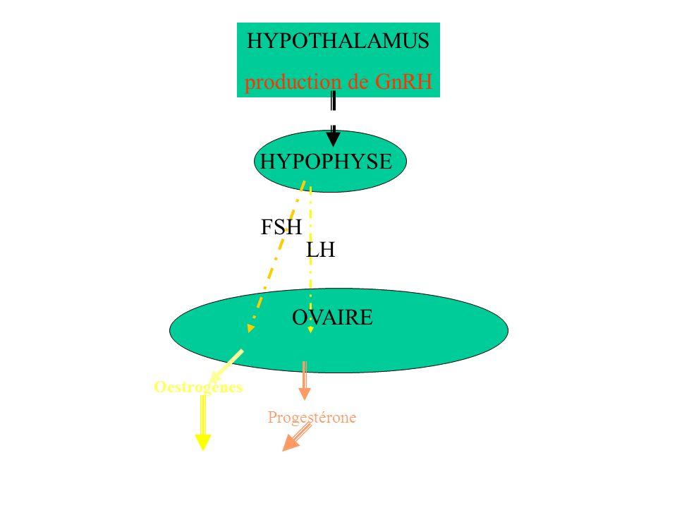 HYPOTHALAMUS production de GnRH HYPOPHYSE FSH LH OVAIRE Oestrogènes Progestérone Développement utérin