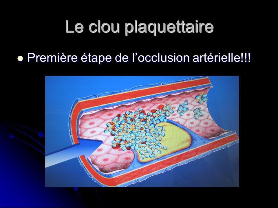 Le clou plaquettaire Première étape de locclusion artérielle!!! Première étape de locclusion artérielle!!!
