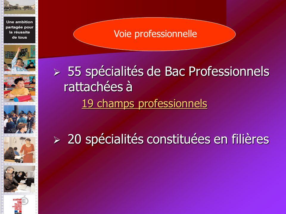 55 spécialités de Bac Professionnels rattachées à 55 spécialités de Bac Professionnels rattachées à 19 champs professionnels 19 champs professionnels 20 spécialités constituées en filières 20 spécialités constituées en filières Voie professionnelle
