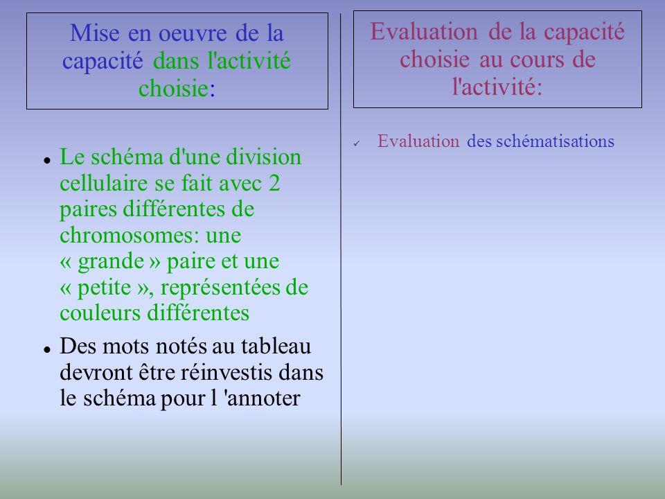 Le schéma d une division cellulaire se fait avec 2 paires différentes de chromosomes: une « grande » paire et une « petite », représentées de couleurs différentes Des mots notés au tableau devront être réinvestis dans le schéma pour l annoter Mise en oeuvre de la capacité dans l activité choisie: Evaluation des schématisations Evaluation de la capacité choisie au cours de l activité: