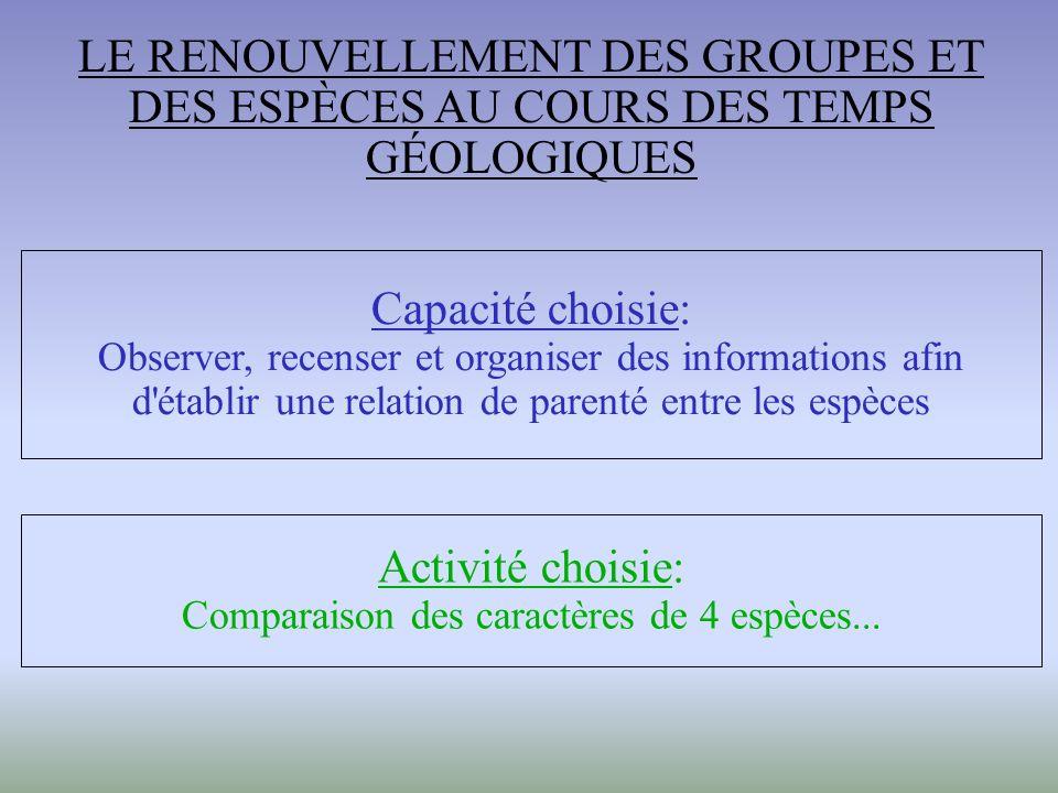 Capacité choisie: Observer, recenser et organiser des informations afin d établir une relation de parenté entre les espèces Activité choisie: Comparaison des caractères de 4 espèces...